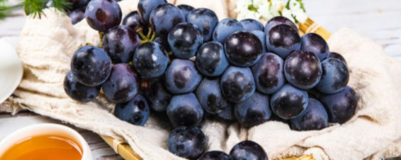 水果酿酒最简单的方法,哪些水果可以酿酒