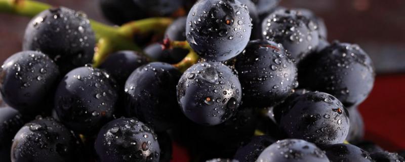 自制葡萄酒怎么做的步骤,如何酿造葡萄酒